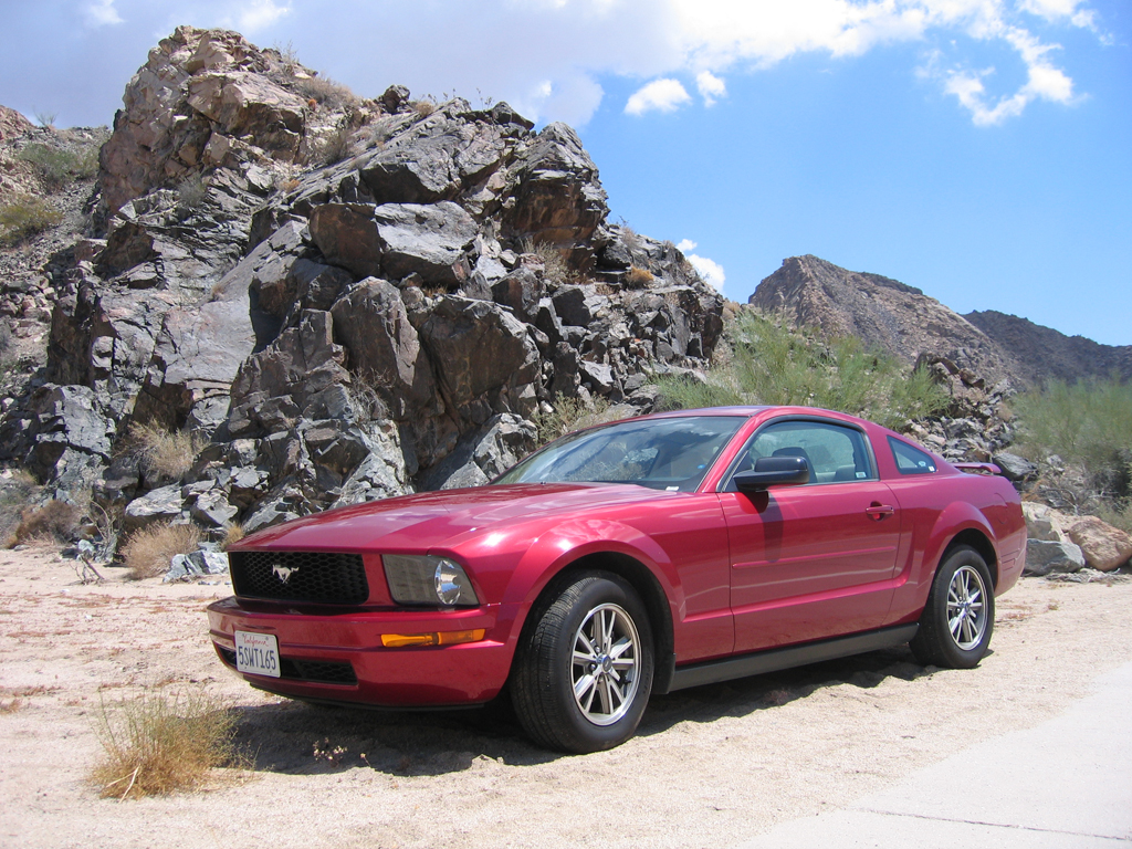 mustang in the sand