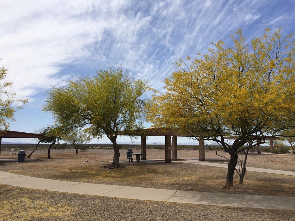 trees in the desert in Arizona