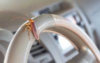 roaches in car